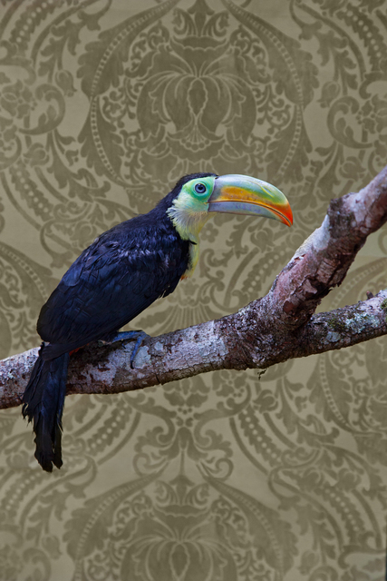 , 'Keel-Billed Toucan No. 7981,' 2012-2018, Foto Relevance