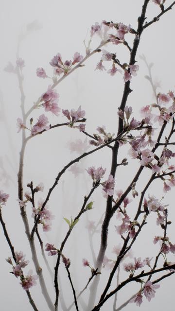 , 'Still Life 005 Cherry,' 2016, Galerie du Monde
