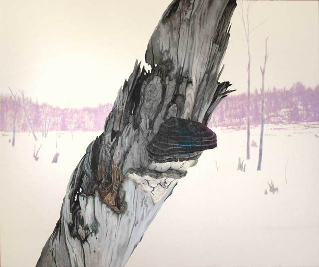 , 'Artist's Conk, Beef Tea Creek,' , Maison Depoivre