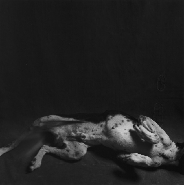 , 'Agostinho's dog,' 1986, Marcelo Guarnieri