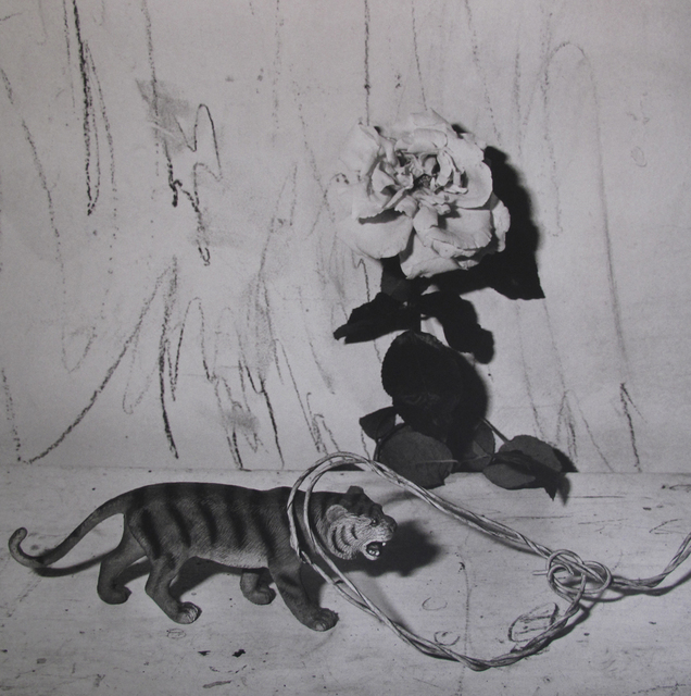 , 'Tiger on Table,' 2007, Willas Contemporary