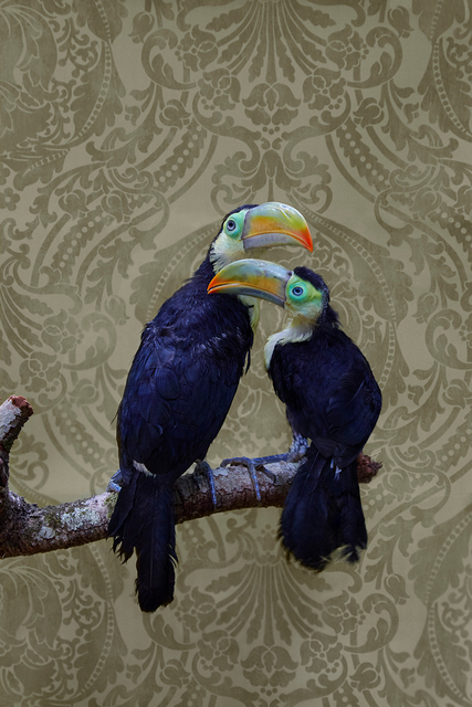 , 'Keel-Billed Toucans No. 7975,' 2012-2018, Foto Relevance