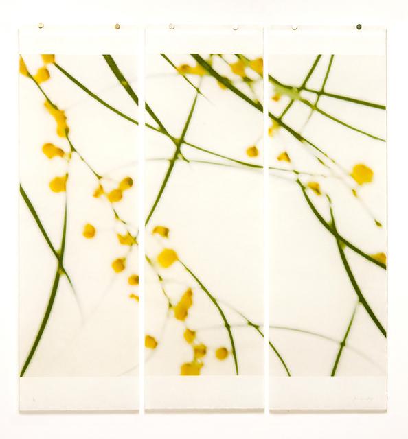 Jeri Eisenberg, 'Acacia, No.1 (triptych)', 2018, Carrie Haddad Gallery