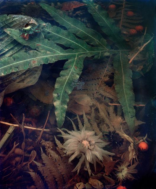 , 'Dark Matter #8, Decomposing Dahlia,' 2017, Huxley-Parlour