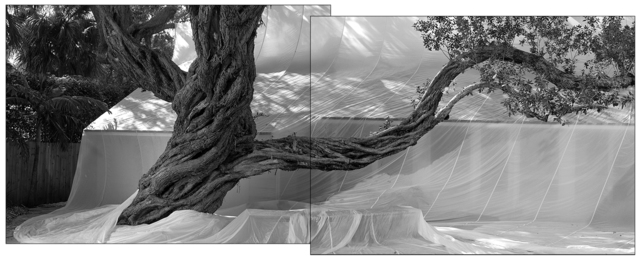 , 'Buttonwood Trees Diptych,' 2016, Hexton Gallery