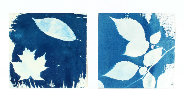Kathleen Sherin, 'Elm and maple (diptych)', 2020, Print, Cyanotype on paper mounted on birch panels, Resource Art