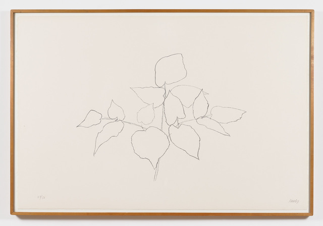 , 'Sarsparilla (or Ailanthus Leaves),' 1979-1980, Talley Dunn Gallery