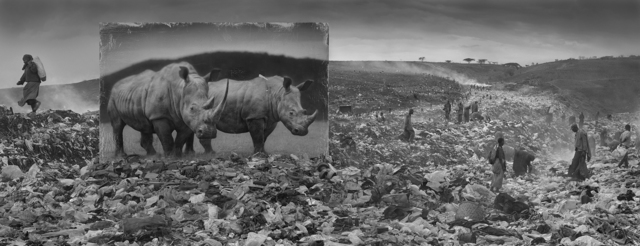 Nick Brandt, 'Wasteland with Rhinos', 2015, Photography, Archival Pigment Print, Fahey/Klein Gallery