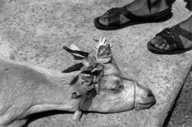 , 'Antes de la matanza (Before the slaughter), La Mixteca, Oaxaca,' 1992, Etherton Gallery