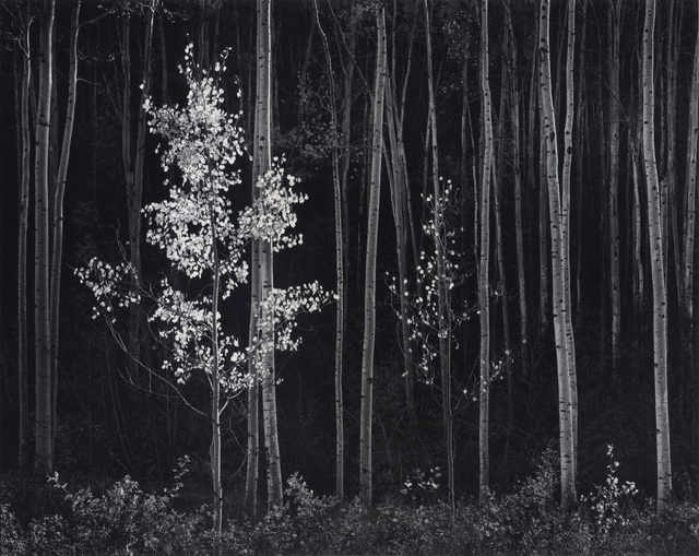 , 'Aspens, Northern New Mexico,' 1958, PHOTOFAIRS | Insights