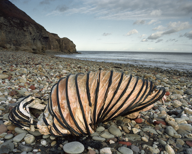 , 'Hawthorn Hive, Afternoon 2 December,' 1999, L. Parker Stephenson Photographs