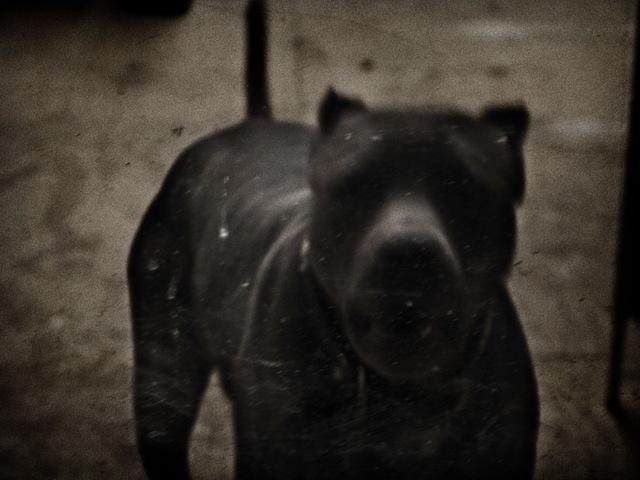 , 'Dog,' 2010, ILEX Gallery