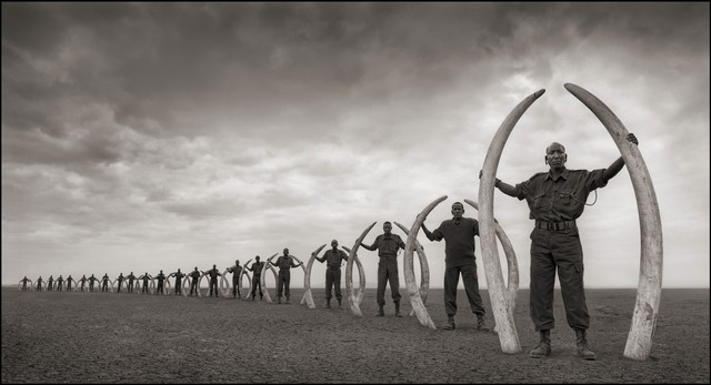 , 'Rangers (Line of) with Tusks of Killed Elephants, Amboseli 2011,' 2011, photo-eye Gallery