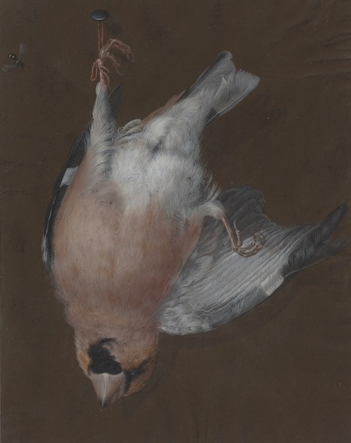 Barbara Dietzsch, 'A Rose-Breasted Finch Hanging from a Nail', ca. 1760, Drawing, Collage or other Work on Paper, Watercolor and gouache on vellum on old mount, National Gallery of Art, Washington, D.C.