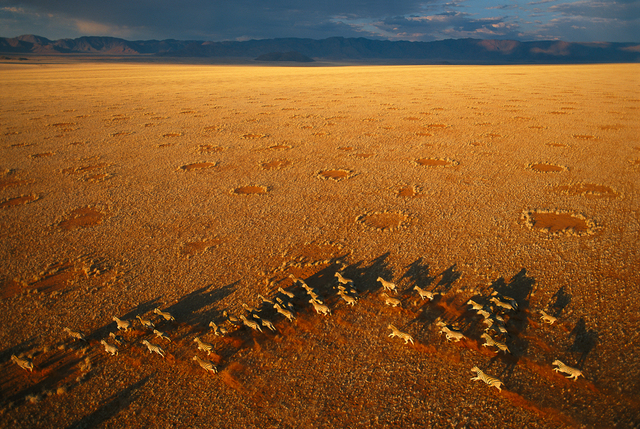 , 'Zebra and Fairy Circles, Namibia,' 2004, Anastasia Photo