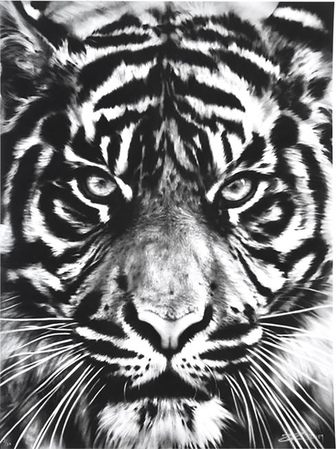 Robert Longo, 'Tiger', 2014, Print, Archival pigment print on wove paper, David Benrimon Fine Art