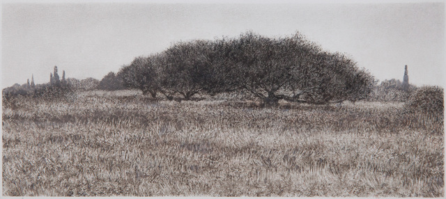George Tzannes, 'Olive Trees in Field', 2010, Arco Gallery