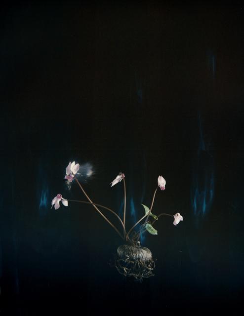 , 'Black Cyclamen P03,' 2018, Talley Dunn Gallery