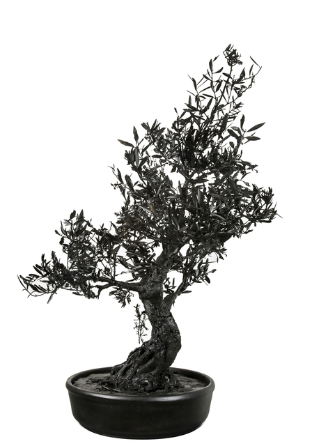 , 'Bonsai Tree,' 2017, Zemack Contemporary Art