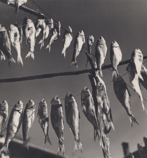 Elisabeth Hase, 'Getrocknete Fische (dried fish)', 1957, Robert Mann Gallery