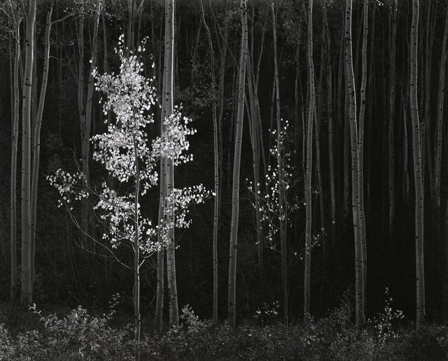 , 'Aspens, Northern New Mexico,' 1958, Atlas Gallery