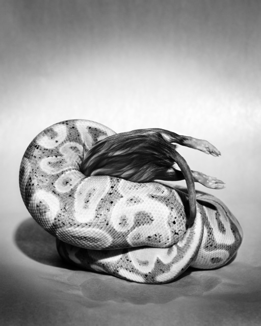 , 'Sculpture I (Banana Constricting Rat),' 2016, SVA Galleries