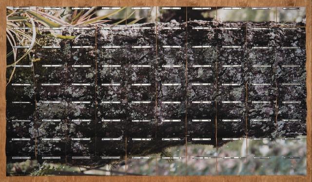 , 'A.A.A. (ARQUIVO ARAUCÁRIA ANGUSTIFOLIA) 001,' 2015, SIM Galeria