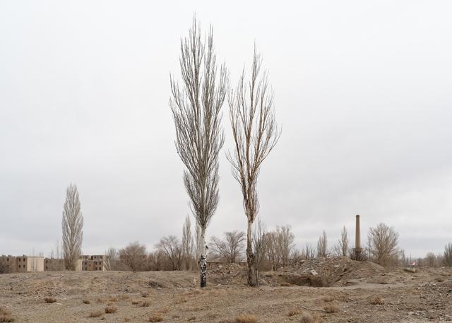 , 'Two Trees,' 2016, 24P Studio