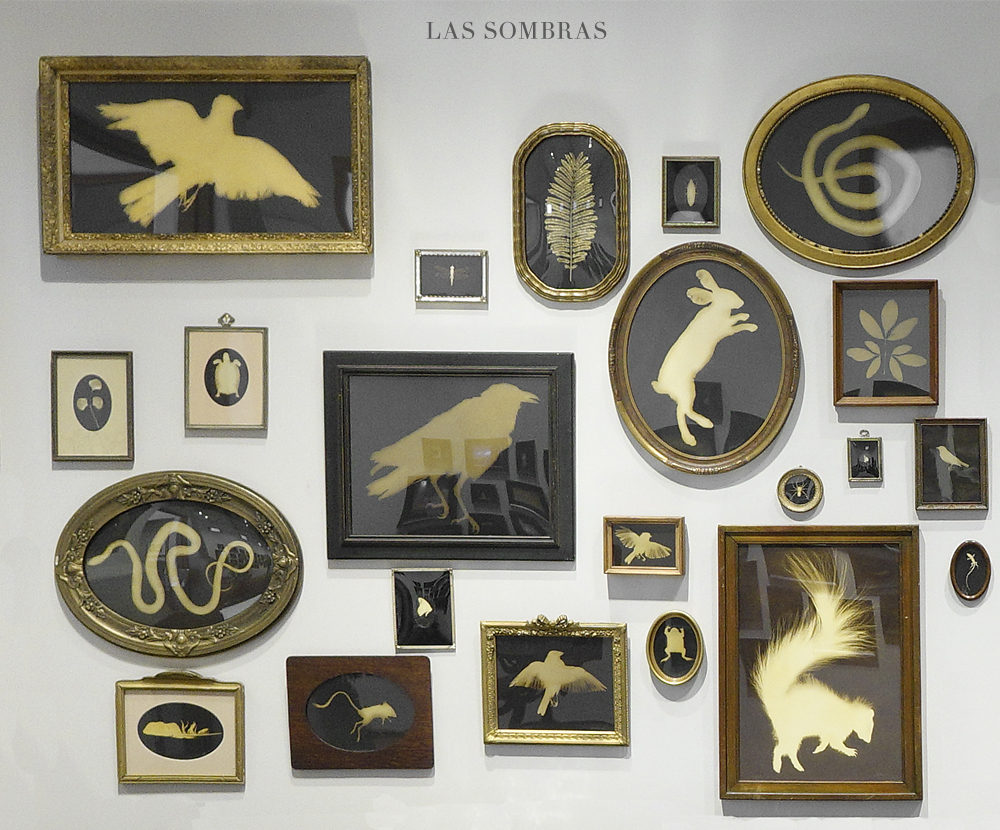 Kate Breakey: Los Sombras– Hand Colored Photograms in Found Frames