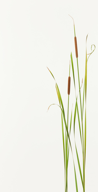 Takashi Tomo-oka, 'Hime gama ( Small reedmace )', 2012, Ippodo Gallery