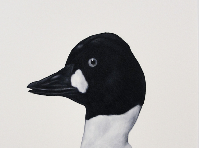 Shelley Reed, 'Goldeneye (after Tunnicliffe)', Painting, Visions West Contemporary