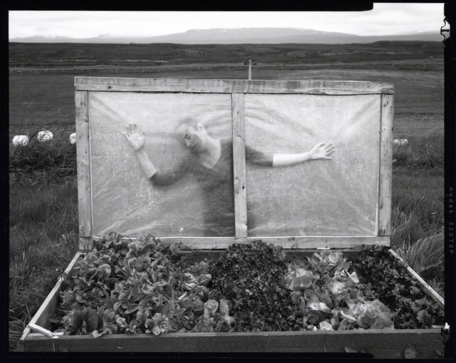, 'Self Portrait. Our Lettuce Bed, Kleppjárnsstaðir, Iceland,' 2014, Panopticon Gallery