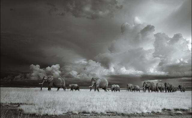 Anton Lyalin, 'Portrait of Africa #134', 2001-2018, Sohn Fine Art