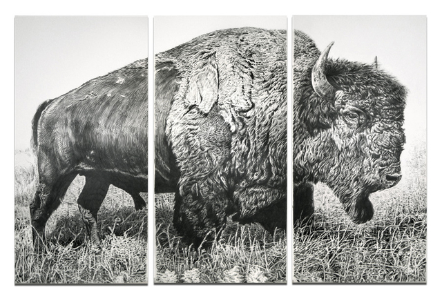 , 'American Bison,' 2013, Sears-Peyton Gallery