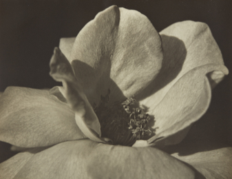 Johan Hagemeyer, 'Flower Form,' 1928, Phillips: The Odyssey of Collecting