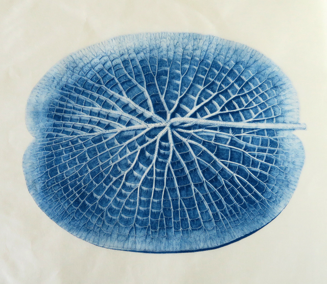 , 'Lilypad, Victoria Amazonica (phthalo blue),' 2018, CMS Art Projects