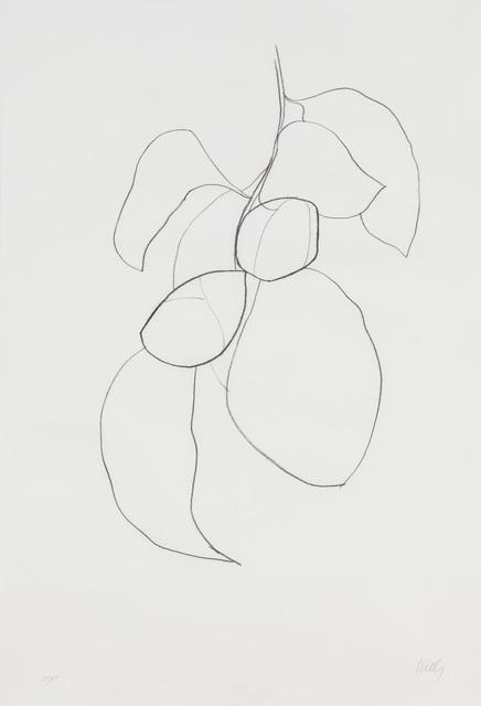 , 'Camellia III,' 1964-1965, Susan Sheehan Gallery