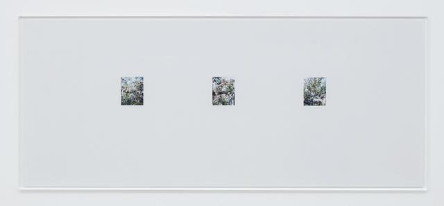 , 'Apple Tree 10,' 2017, Tomio Koyama Gallery