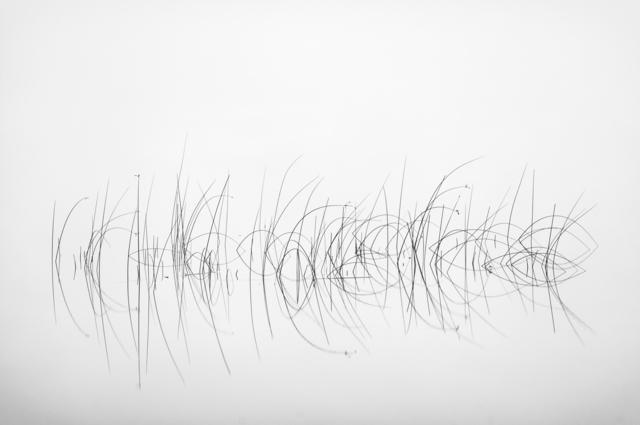 , 'Reeds,' 2009, M Contemporary Art