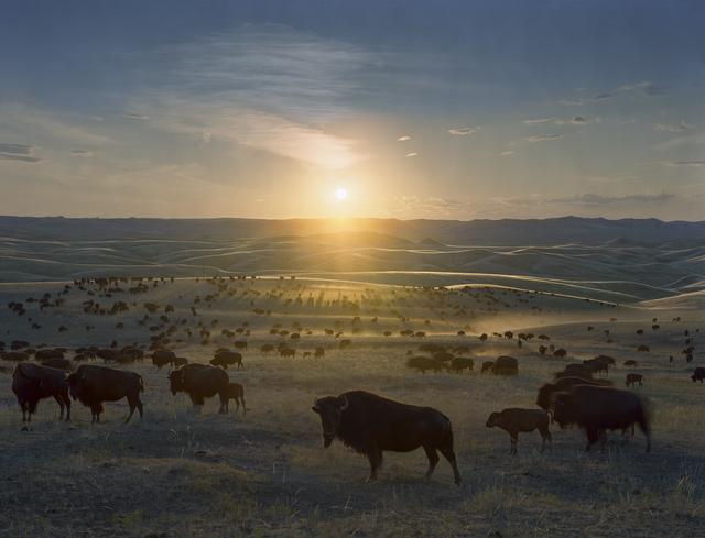 Andrew Moore, 'Flying H Buffalo Ranch, Walworth County, South Dakota', 2006, Kopeikin Gallery