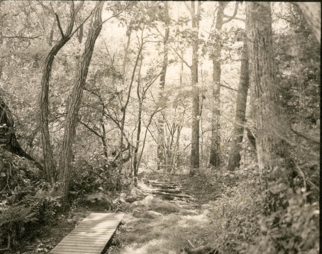 , 'Boardwalk in Woods,' 2003, John Davis Gallery
