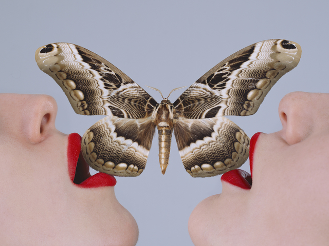 , 'Butterfly,' 2017, Imitate Modern