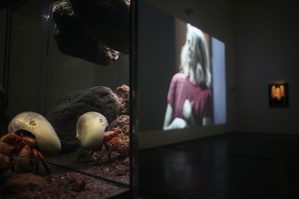 Pierre Huyghe at LACMA, 2015, Photo by Ola Rindal