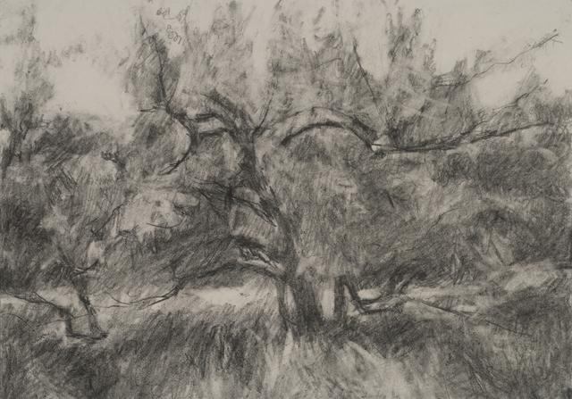 , 'Orchard #11,' , Dowling Walsh