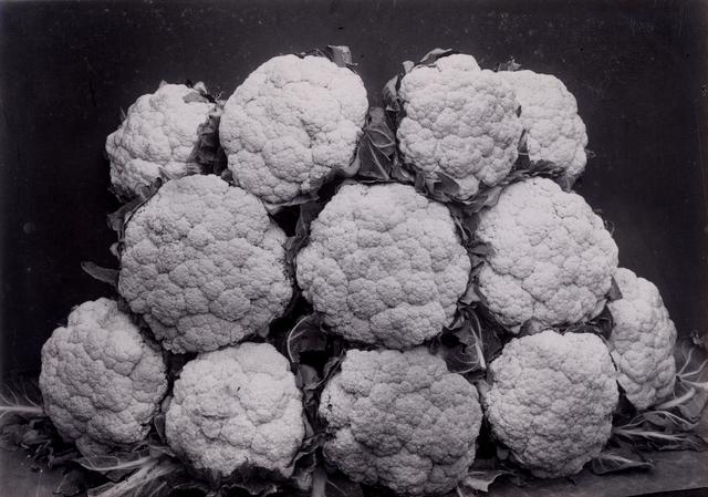 Charles Jones, 'Broccili Late Queen', ca. 1990, Michael Hoppen Gallery