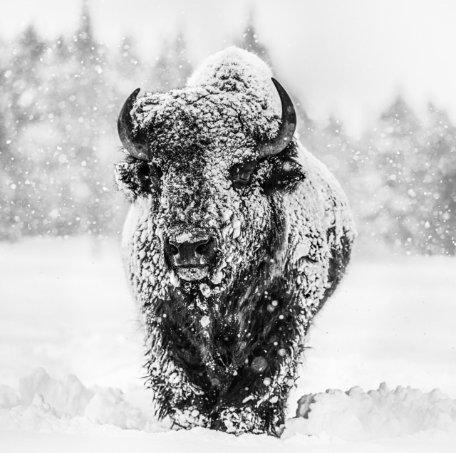 David Yarrow, 'Winter's Coming', 2020, Photography, Archival Pigment Print, Maddox Gallery