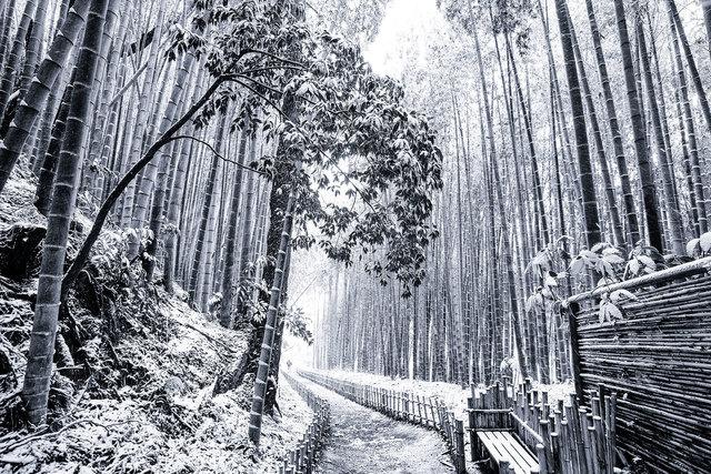 Takeo Hirose, 'Japanese winter wonderland No.1', 2019, Photography, Archival Pigment Print, BBA Gallery