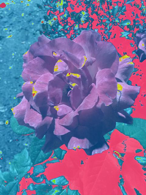 , 'Night Flower,' 2017, Luis De Jesus Los Angeles
