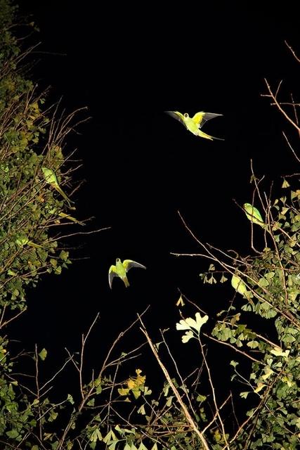 , 'Tokyo Parrots 039,' 2013, CHRISTOPHE GUYE GALERIE