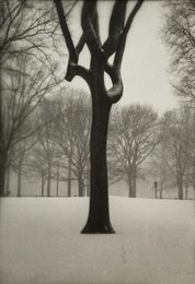 Tree, Central Park (two works)